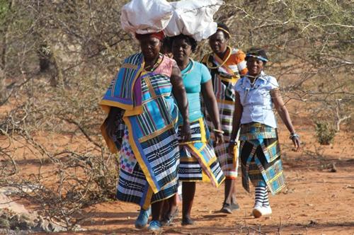 Growing a Culture of Caring: Sensitive Baobab Fruit Harvesting