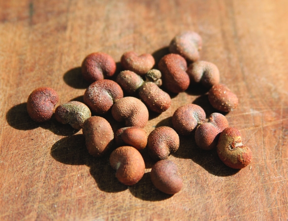About baobabs: why baobab oil is so rare and precious